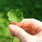How to find a four leaf clover for St. Patrick's Day